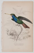 Antiques:Posters & Prints, Lot of 11 Vintage Hand-Colored Steel Engraved HummingbirdIllustrations. From The Natural History of Humming-Birds,Edin...