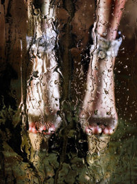 MARILYN MINTER (American, b. 1948) Solaris, 2010 Chromogenic, diasec mounted, 2010 40 x 30 inches