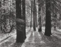 Photographs, ANSEL ADAMS (American, 1902-1984). Forest Floor, Yosemite Valley, circa 1950. Gelatin silver, 1979. 15 x 19-1/4 inches (...
