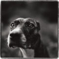 Photographs, KEITH CARTER (American, b. 1948). Lost Dog, 1992. Gelatin silver, printed later. 15 x 15 inches (38.1 x 38.1 cm). Ed. 26...