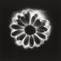 Photographs:20th Century, ROBERT MAPPLETHORPE (American, 1946-1989). Flower, 1985.Gelatin silver, 1985. 15-1/4 x 15 inches (38.7 x 38.1 cm). Ed. ...