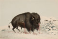 Prints, GEORGE CATLIN (American, 1796-1872). North American Indian Portfolio . Wounded Buffalo Bull (Plate 16), 1844. Hand-c...