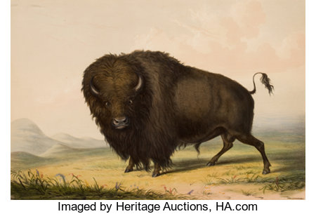 GEORGE CATLIN (American, 1796-1872) North American Indian Portfolio  Buffalo Bull, Grazing (Plate 2), 1844 Hand-c...