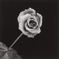 Photographs:20th Century, ROBERT MAPPLETHORPE (American, 1946-1989). Rose, 1989.Gelatin silver, 1989. 19 x 19 inches (48.3 x 48.3 cm). Ed. 8/10....