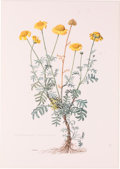 """Books:Prints & Leaves, Claus Caspari. Lot of Nineteen Color Plates of Various EuropeanPlants and Flowers. 7.5"""" x 10.75"""", from Mitteleurop?ische..."""