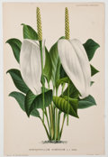 Books:Prints & Leaves, Eight 19th Cent. Chromolitho Plates of Flowers & Plants....