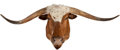 Miscellaneous, Texas Longhorn Shoulder Mount. ...