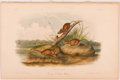 Books:Prints & Leaves, John James Audubon. Hand-Colored Lithographic Print of theOrange Colored Mouse. Plate XCV. Taken from TheQuadrup...