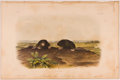 Books:Prints & Leaves, John James Audubon. Hand-Colored Lithographic Print of theCommon Star-Nose Mole. Plate LXIX. Taken from TheQuadr...
