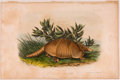 Books:Prints & Leaves, John James Audubon. Hand-Colored Lithographic Print of the NineBanded Armadillo. Plate CXLVI. Taken from The Quad...