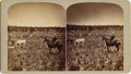 Photography:Stereo Cards, IMPRESSIVE GURNSEY & BRANDT ROPING STEREOVIEW. Taken in 1876, this Colorado Springs-area image depicts a cowboy on his hors... (Total: 1 Item)