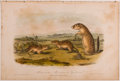 Books:Prints & Leaves, John James Audubon. Hand-Colored Lithographic Print of theMexican Marmot - Squirrel. Plate CIX. Taken from TheQu...