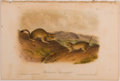 Books:Prints & Leaves, John James Audubon. Hand-Colored Lithographic Print ofRichardson's Spermophile. Plate L. Taken from TheQuadruped...