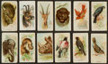 "Non-Sport Cards:Sets, 1910's Philadelphia Confections E29 ""Zoo Cards"" and E30 ""Birds""Near Sets (2). ..."