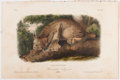 Books:Natural History Books & Prints, John James Audubon. Plate XVI: Canada Lynx. Male. Hand-Colored Lithograph From The Quadrupeds of North America. ...