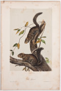 Books:Natural History Books & Prints, John James Audubon. Plate CIV: Collies Squirrel Hand-Colored Lithograph From The Quadrupeds of North America. 7...