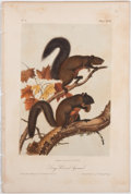 Books:Natural History Books & Prints, John James Audubon. Plate XXVII: Long-Haired Squirrel Hand-Colored Lithograph From The Quadrupeds of North America...