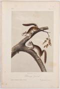 "Books:Natural History Books & Prints, John James Audubon. Plate XXV: Downy Squirrel Hand-Colored Lithograph From The Quadrupeds of North America. 7"" ..."