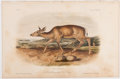 Books:Natural History Books & Prints, John James Audubon. Plate LXXVIII: Black-Tailed Deer Hand-Colored Lithograph From The Quadrupeds of North America....
