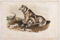 Books:Natural History Books & Prints, John James Audubon. Plate CXIII: Esquimaux Dog Hand-Colored Lithograph From The Quadrupeds of North America. 10...