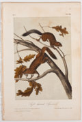 Books:Natural History Books & Prints, John James Audubon. Plate XIX: Soft-Haired Squirrel Hand-Colored Lithograph From The Quadrupeds of North America....