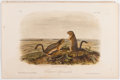 Books:Natural History Books & Prints, John James Audubon. Plate XXXIX: Leopard Spermophile (Thirteen Line Ground Squirrel) Hand-Colored Lithograph From The Qu...