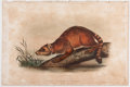 Books:Natural History Books & Prints, John James Audubon. Plate CLV: Crab-Eating Raccoon Hand-Colored Lithograph From The Quadrupeds of North America....