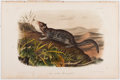 Books:Natural History Books & Prints, John James Audubon. Plate CXXXIX: Large-Tailed Spermophile (Rock Squirrel) Hand-Colored Lithograph From The Quadrupeds o...