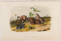 Books:Prints & Leaves, John James Audubon. Hand-Colored Lithographic Print of theCanada Pouched Rat. Plate XLIV. Taken from TheQuadrupe...