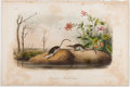 Books:Prints & Leaves, John James Audubon. Hand-Colored Lithographic Print of theAmerican Marsh Shrew. Plate CXXV. Taken from TheQu...