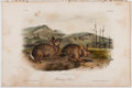 Books:Prints & Leaves, John James Audubon. Hand-Colored Lithographic Print of Bachman'sHare. Plate CVIII. Taken from The Quadrupeds of N...
