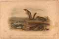 Books:Prints & Leaves, John James Audubon. Hand-Colored Lithographic Print of Harris'Marmot-Squirrel and the California Meadow-Mouse. ...
