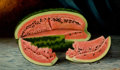 Fine Art - Painting, American:Antique  (Pre 1900), JULIA MCENTEE DILLON (American, 1834-1919). Watermelons,1893. Oil on canvas. 18 x 30 inches (45.7 x 76.2 cm). Signed an...