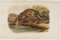 Books:Prints & Leaves, John James Audubon. Plate LXXXXI: Ocelot or Leopard CatHand-Colored Lithograph From The Quadrupeds of NorthAmerica...