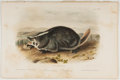 Books:Prints & Leaves, John James Audubon. Hand-Colored Lithographic Print of theAmerican Badger. Plate XLVII. Taken from TheQuadru...