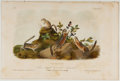 Books:Prints & Leaves, John James Audubon. Hand-Colored Lithographic Print of the FourStriped Ground Squirrel. Plate XXIV. Taken from ...
