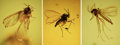 Amber, AMBER-ENTRAPPED FLIES. ... (Total: 3 Items)