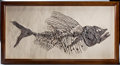 Fossils:Fish, RARE AND COMPLETE FOSSIL FISH. ...