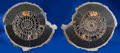 Fossils:Cepholopoda, LARGE PAIR OF PYRITIZED AMMONITE SLICES. ...