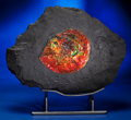 Fossils:Cepholopoda, GEM AMMONITE IN MATRIX. ...
