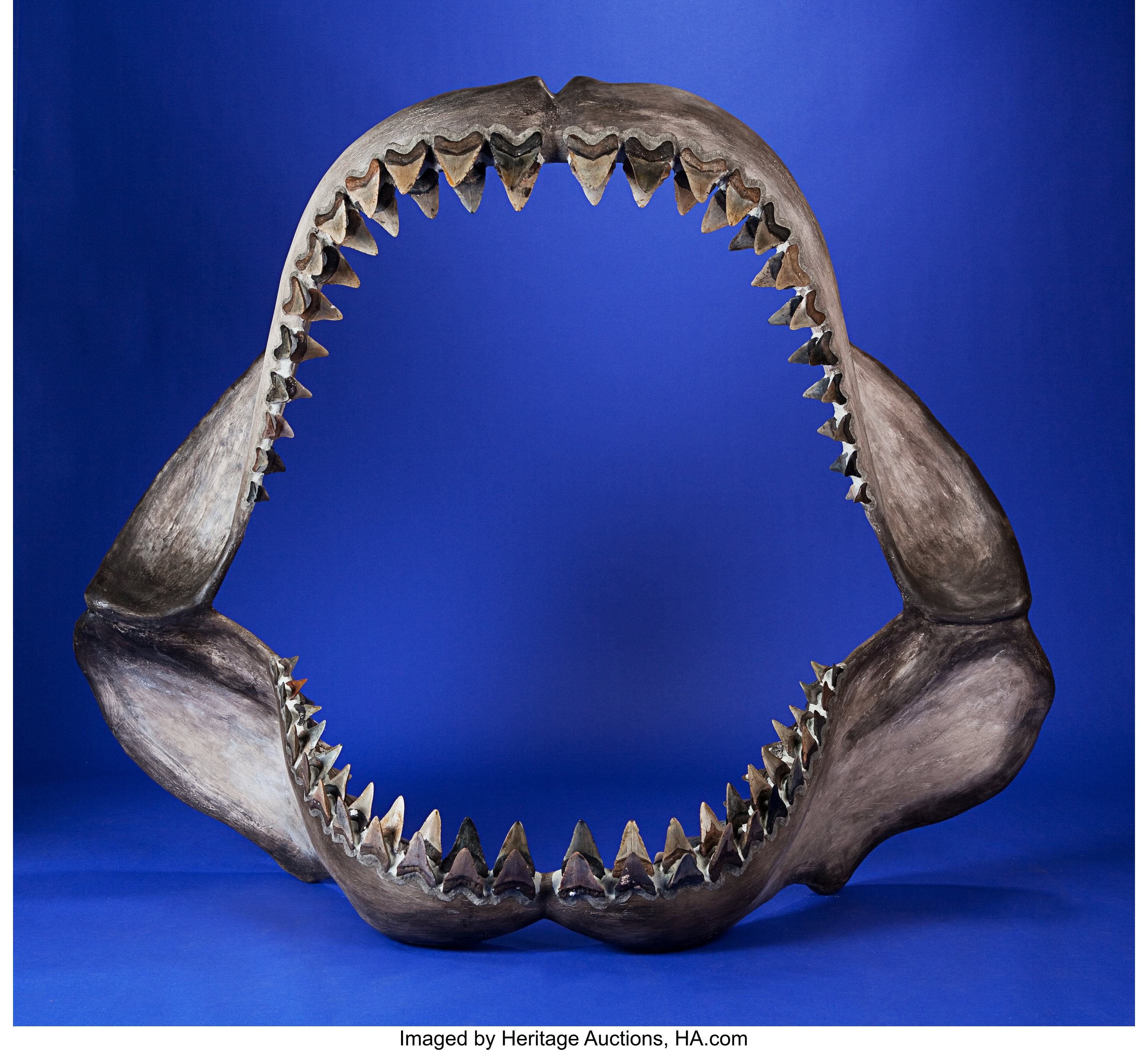 Large Mega Shark Jaw With Fossil Teeth Fossils Fish Lot 49302 Heritage Auctions