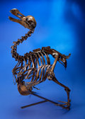 Dinosauria:Casts, RARE DODO BIRD SKELETON CAST. ...