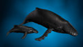 Lapidary Art:Carvings, OBSIDIAN WHALES: MOTHER AND CALF. ...