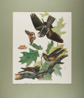 "Books:Natural History Books & Prints, [John J. Audubon]. Whip-Poor-Will Caprimulgus Vociferus Color Lithograph. 14"" x 17"". Originally published as Pla..."