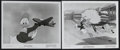 """Movie Posters:Film Noir, Donald Duck Lot (RKO, 1941/1950). Stills (2) (8"""" X 10""""). """"Old MacDonald Duck"""" and """"Test Pilot Donald."""" Animated. Starring th... (Total: 2 Items)"""