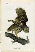 Antiques:Posters & Prints, Barred Owl Audubon Royal Octavo Print. Plate number 36 features thebarred owl, perched on top of a large tree branch. Barre...