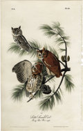 Antiques:Posters & Prints, Little Screech Owl Audubon Royal Octavo Print. Plate number 40, theLittle Screech Owl shows three owls seated on a Jersey P...
