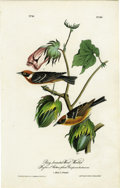 Antiques:Posters & Prints, Bay-breasted Wood-Warbler Audubon Royal Octavo Print. The highlightof plate number 80 is the beautifully plumed bay-breaste...
