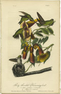 Antiques:Posters & Prints, Ruby-Throated Hummingbird Audubon Royal Octavo Print. Plate 253with eight pages of related text. Here Audubon shows two mal...