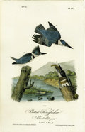 Antiques:Posters & Prints, Belted Kingfisher (Alcedo Alcyon) Audubon Royal Octavo Print. Platenumber 255 is home to one of the most beautiful birds in...